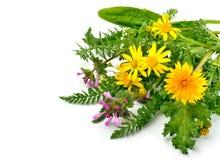 Beautiful wildflowers, chamomiles, milfoil Stock Image