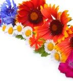 Beautiful wildflowers, chamomilies, chrysanthemums, cornflower Royalty Free Stock Image