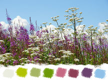 Beautiful wildflowers color palette Stock Images