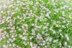Beautiful wildflowers field texture Royalty Free Stock Images