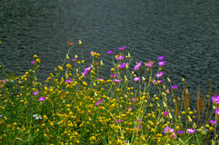 Beautiful wildflowers lake banks Stock Photos