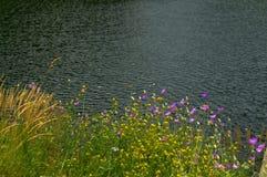 Beautiful wildflowers lake banks Stock Photography