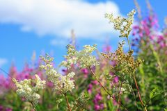 Beautiful wildflowers meadow Royalty Free Stock Photos