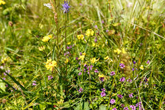 Beautiful wildflowers on a meadow Stock Images