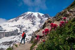 Beautiful wildflowers and Mount Rainier, Washington state stock images