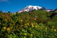 Beautiful wildflowers and Mount Rainier, Washington state stock photography
