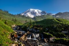 Beautiful wildflowers and Mount Rainier, Washington state royalty free stock image