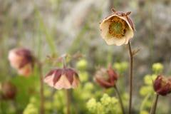 Beautiful wildflowers Royalty Free Stock Photos