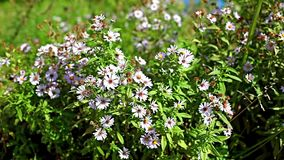 Beautiful wildflowers. Wildflowers sway in the wind close to stock video