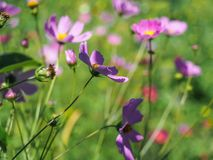 Beautiful wildflowers on a wonderful sunny day Royalty Free Stock Image