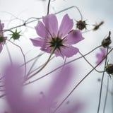 Beautiful wildflowers on a wonderful sunny day Stock Image