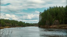 Beautiful wildlife landscape. River in the middle of the forest. Time laps stock video
