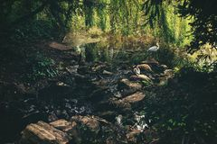 Free Beautiful Wildlife Scene, Small Creek Near The Lake With Duck And Heron Royalty Free Stock Photos - 147022538