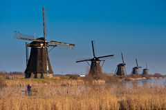 Beautiful windmill landscape at kinderdijk Royalty Free Stock Images