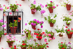 Beautiful Window and Wall Decorated Flowers - Old European Town, Stock Image