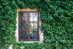 Beautiful window in a wall overgrown by green ivy Royalty Free Stock Photos