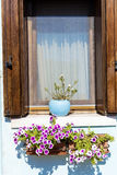 Beautiful windows with hanging flowers in Burano island (Venice, Italy) Stock Images