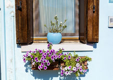 Beautiful windows with hanging flowers in Burano island (Venice, Italy) Royalty Free Stock Images
