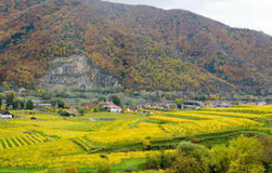 Beautiful wine growing in autumn around Durnstein town,Austria Royalty Free Stock Photos