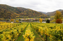 Beautiful wine growing on danube river bank in autumn around Durnstein town,Austria Royalty Free Stock Photos
