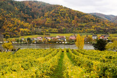 Beautiful  wine growing on danube river bank in autumn around Durnstein town,Austria Stock Photo