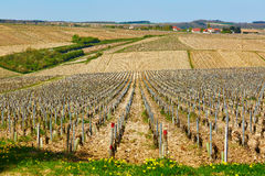 Beautiful wineyards in Burgundy Stock Photography