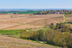 Beautiful wineyards in Burgundy Royalty Free Stock Photos