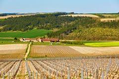 Beautiful wineyards in Burgundy Stock Photos