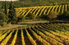 Beautiful Wineyards in Tuscany, Chianti, Italy. Wineyards in Tuscany, vinegrapes, and leaves vine. Chianti region, in Tuscany, Italy royalty free stock photos
