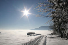 Beautiful Winter. Winter in a forest.road, trees and snow under sunlight Stock Photo