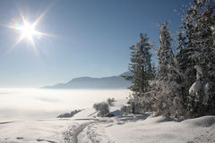 Beautiful Winter. Winter in a forest, trees and snow under sunlight Stock Photo