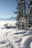 Beautiful Winter. Winter in a forest, trees and snow under sunlight stock image
