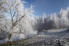 Beautiful Winter. Winter in a forest, trees and snow Royalty Free Stock Photo