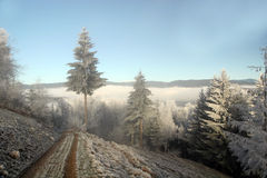 Beautiful Winter. Winter in a forest, trees and snow Royalty Free Stock Image