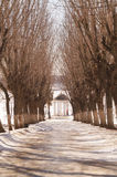 Beautiful winter alley with trees without leaves Arbour Ostrovsky. In Kostroma, Russia Royalty Free Stock Photography