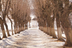 Beautiful winter alley with trees without leaves. Arbour Ostrovsky in Kostroma, Russia Royalty Free Stock Photography