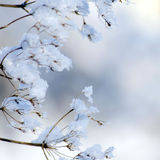 Beautiful winter background with dry plant in snow Stock Image