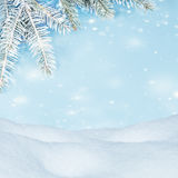 Beautiful winter background. Snowdrifts, spruce branches, flying snow Royalty Free Stock Image