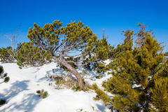 Beautiful winter in Beskid mountains Stock Photos