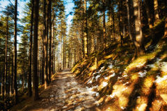 Beautiful winter in Beskid mountains Royalty Free Stock Photography