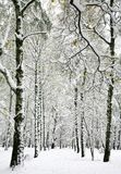 Beautiful winter birch trees with yellow autumn leaves Stock Photos