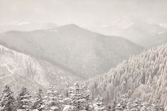 Beautiful winter Carpathian mountains. Winter forest in the mountains. Majestic winter treet. Dramatic wintry scene. Location Carpathian national park, Ukraine Royalty Free Stock Photos
