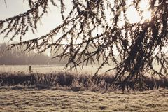 Beautiful winter peyhazh tree in frost and white bench Royalty Free Stock Photography