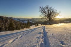 Beautiful winter Christmas landscape. Human footprint track path in crystal white deep snow in empty field, spruce trees forest,. Hills and mountains on horizon stock photo