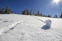 Beautiful winter Christmas landscape. Steep mountain hill slope with human track path in crystal deep snow and green spruce trees. White bright sun shining on stock photography