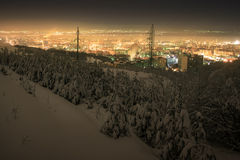 Beautiful winter city landscape with pine trees in snow Royalty Free Stock Photos