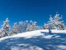 Beautiful winter climates. Winter scenery in the mountains Beskid Sadecki. Photography chilled with beech trees covered with snow and the sun piercing through Royalty Free Stock Photo