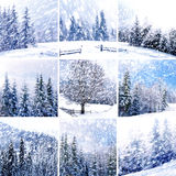 Beautiful winter collage. With snow covered trees Royalty Free Stock Image