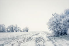 Beautiful winter country landscape snowy trees and field, outdoor Royalty Free Stock Image