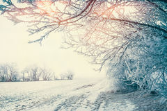 Beautiful winter country landscape with snowy trees and field at sunlight, outdoor Stock Photos